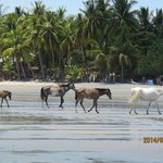 Horses wandering freely on Samara Beach