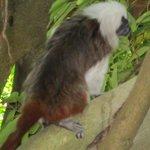 Monkey At Moody Gardens