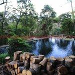 O imenso verde da área externa com a piscina