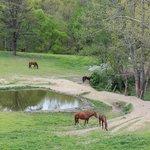 Equestrian Adventures. Beautiful horses and beautiful scenery!