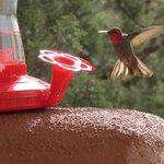 Hummingbird Show