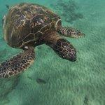 Turtle at Makena Landing