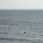 We saw dolphins from the room; they were there for a long time!