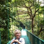 one of the Selvatura bridges, above the canopy!