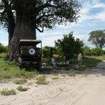 Lunch under a baobab