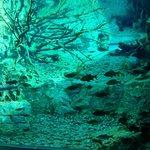 Аквариум с холодной водой и речными рыбами