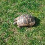 de schildpadden lopen vrij rond