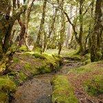 Myrtle Forest, Overland Track
