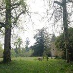 Vue depuis la forêt à côté du château