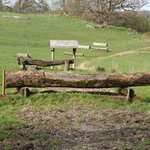 Some of the fences, a lot of logs