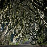 one of Roger's insider tips (the Dark Hedges near Ballycastle)