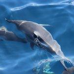 Sleeping dolphins ;-)