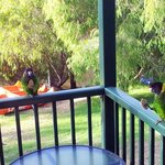 Parrots come to visit on the veranda of our chalet