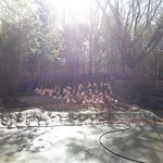Flamingos!!!!!!  They are the first to greet you upon entering the zoo.