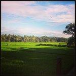 Harmony villa view