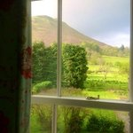 catbells in the back garden