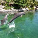 Definitely book free bike tour. You can see dolphins!
