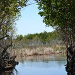 Florida Mangroves