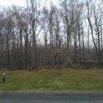Fresh air & forest view!