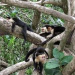 monkeys at Manuel Antonio
