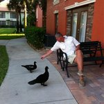 The ducks you can hand feed.