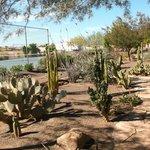 Resort desert garden