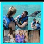 Dolphin Bringing Ring to Propose