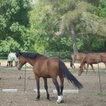 les chevaux de l'écurie privée