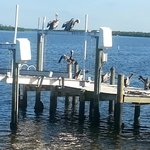 View from our deck show Anihingas and Pelicans enjoying themselves
