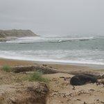 Sea lions sheltering on beach at Waipapa Point