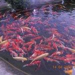 Рыбки хорошо откормленные