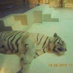 За стеклом белый тигр