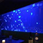 954 Steak House Live Jellyfish in tank