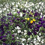 И еще цветы )