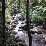 El Yunque Natl Forest Trail