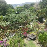 Jardines y bungalows