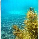 great snorkeling...