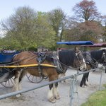 Jaunt Carts at Muckross House