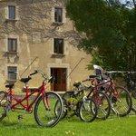 Bicicletas de todos los tamaños