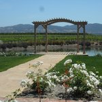 view out to the vineyards