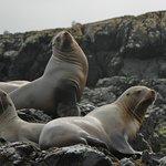 Sea lions off of Vasquez island