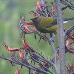 Bird life stunning