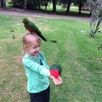 The kids loved the parrots!