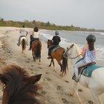 Playa Ponies Foto