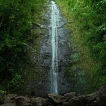 熱帯雨林の中の散歩は気持ちいい!