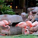 Os flamingos do Jardim do Hotel Flamingo