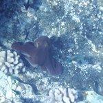 Octopus at Molokini crater - a rare sighting