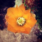 Cactus flower from the grounds