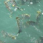 Fishes @Beyt Dwarka