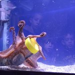 An octopus open a jar and eat the fish inside